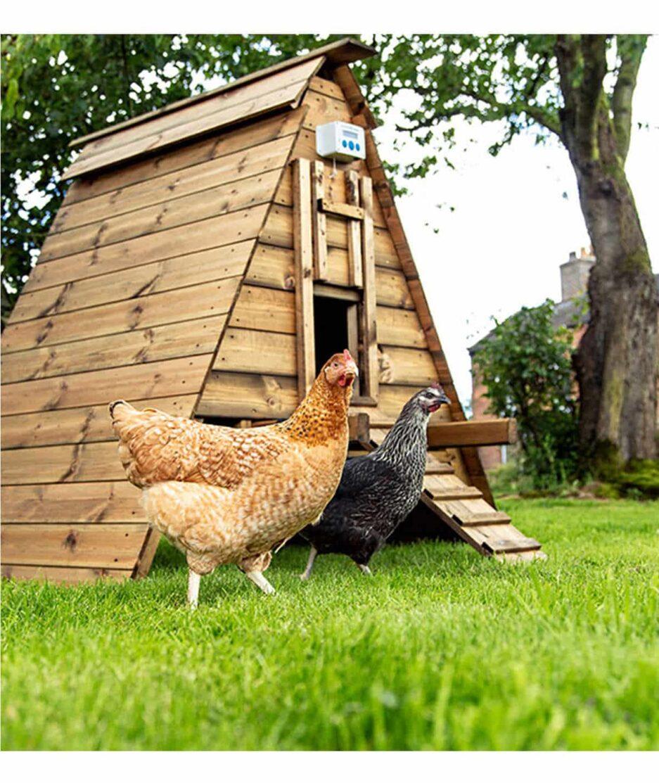 Portier automatique poulailler ChickenGuard Premium, avec deux poules